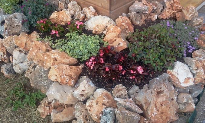 Aiuole con sassi e piante affordable aiuola con piante for Piante grasse ornamentali